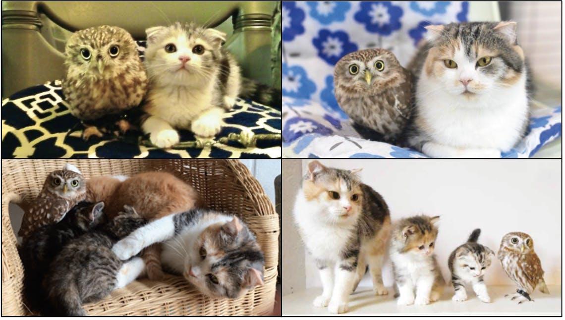 左上からフクとマリモの出会った頃→1年後→マリモの授乳に混じるフク→三毛猫の孫(マミモ、マルモ)の誕生