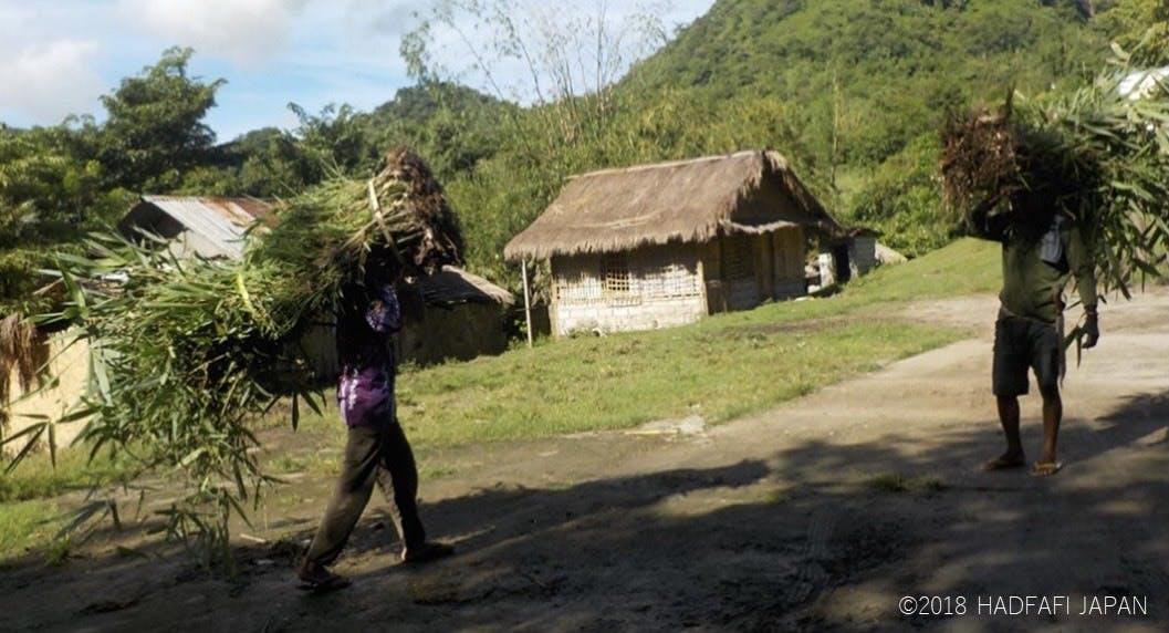 竹の植林の様子