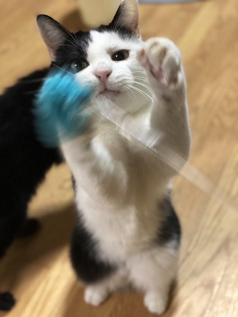 猫の「デルタ」