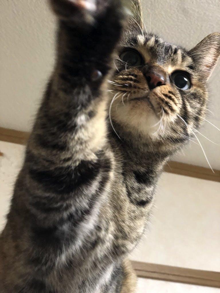 猫の「まい」