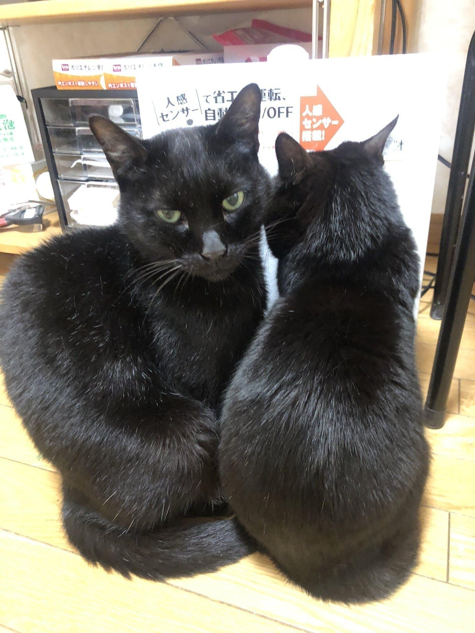 猫の「ななお」と「ジジ」
