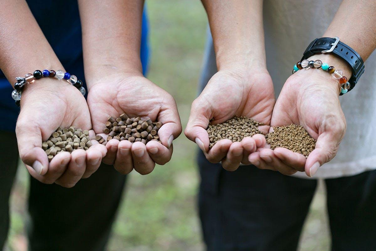霧島産の麹菌や霧島茶も加えたオリジナル配合の餌
