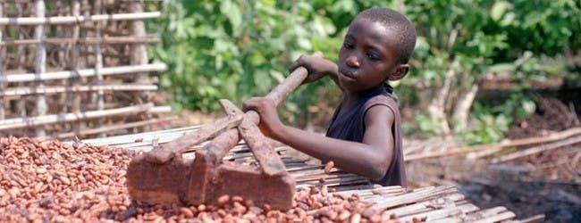 カカオ生産地の児童労働(国際協力NGO「ACE JAPAN」ウェブサイトより引用)