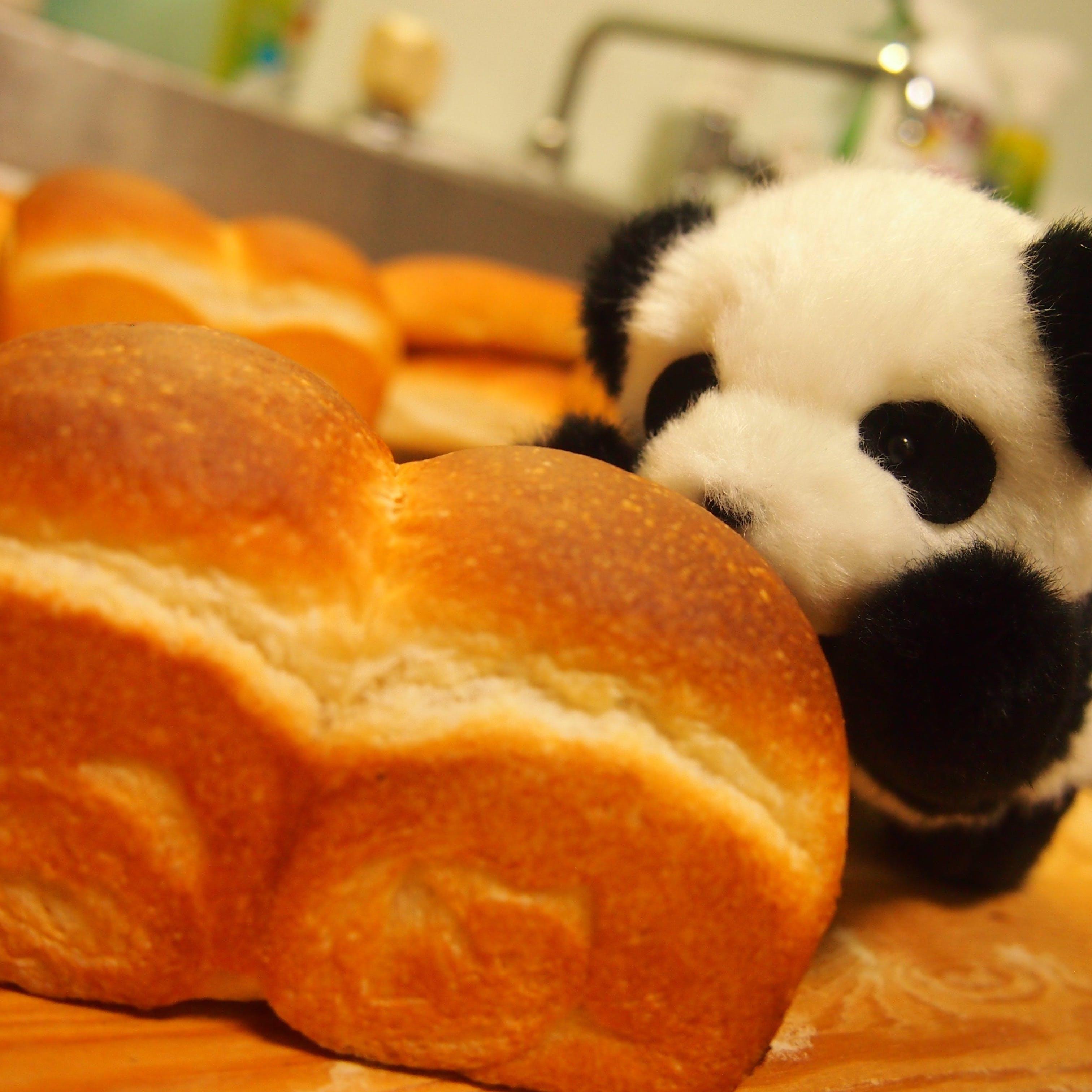 パン屋さんの「常識」を覆す!鳥取パン専門店「パン工房ほとり」の挑戦。