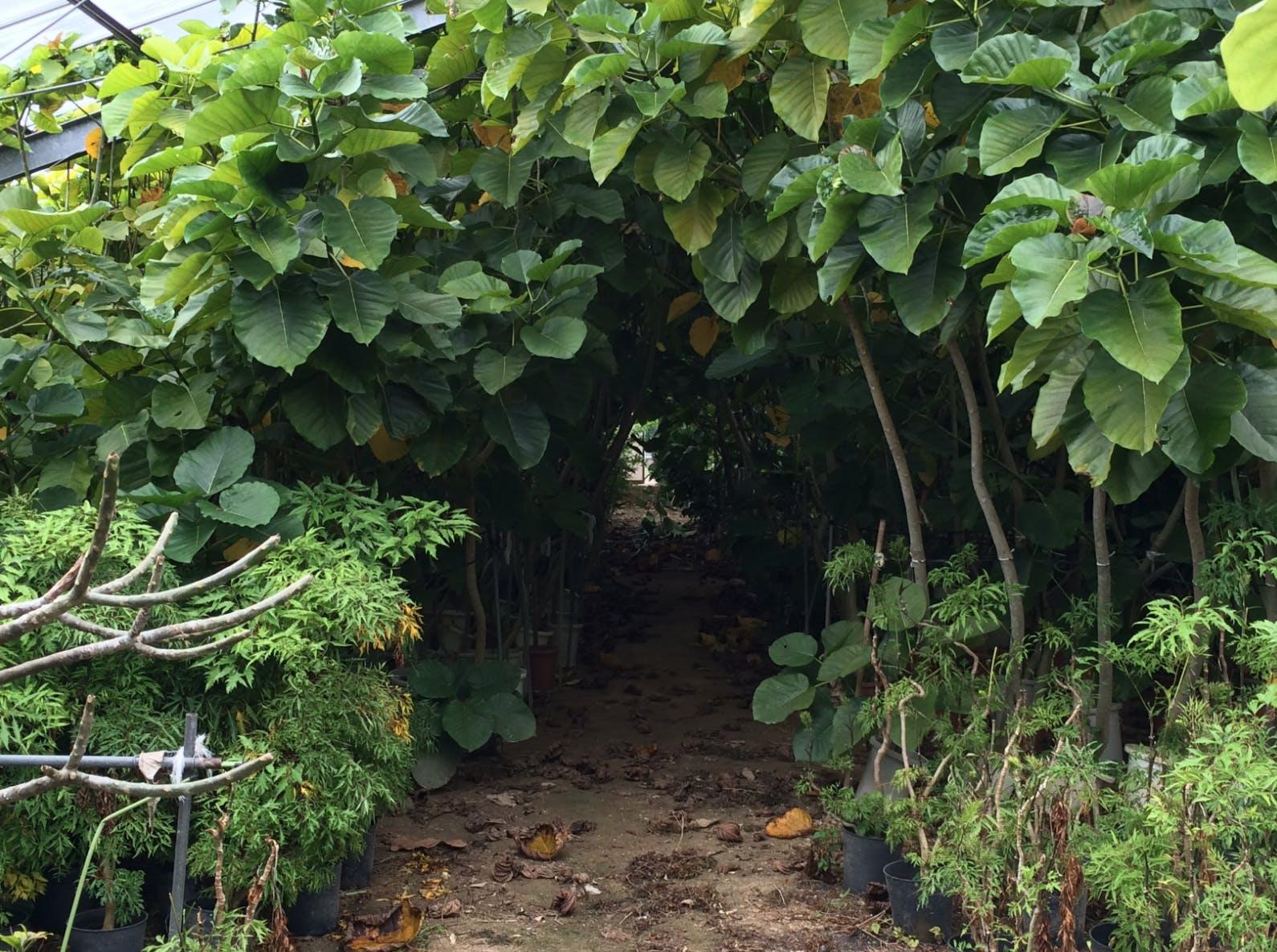 枯らしたくない人のために。 土を使わない観葉植物「セラミックソイル」