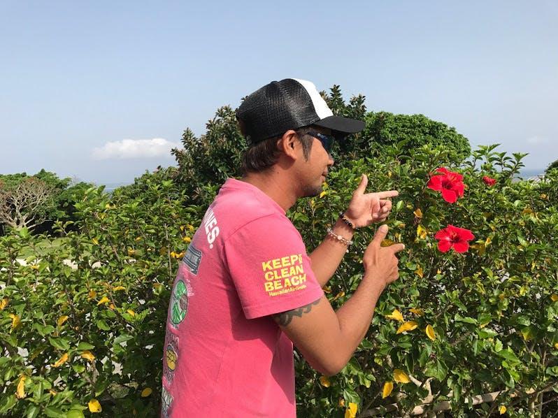 ハイビスカスで沖縄へ恩返し