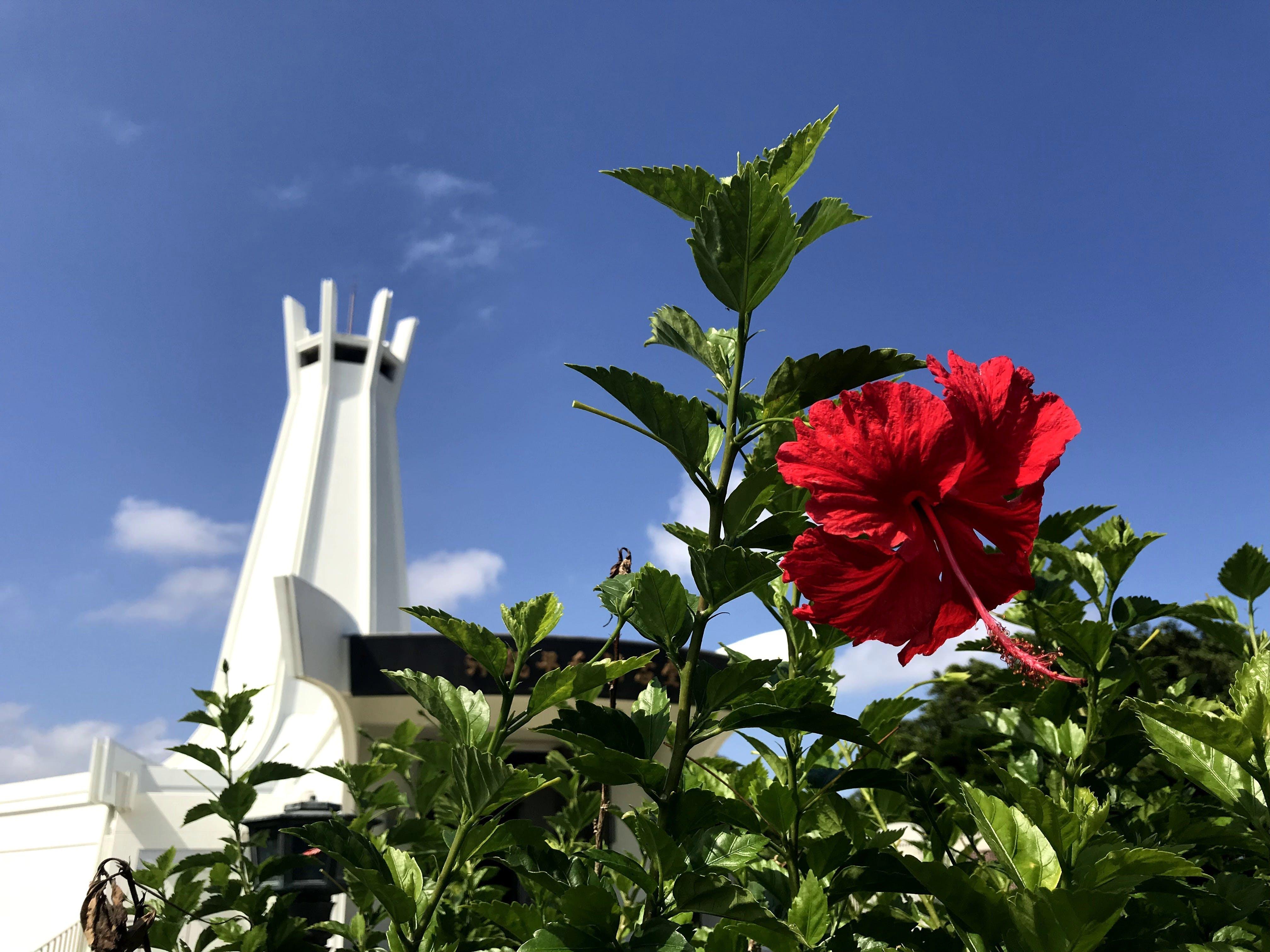 沖縄平和祈念公園の白い塔&真っ赤なハイビスカス