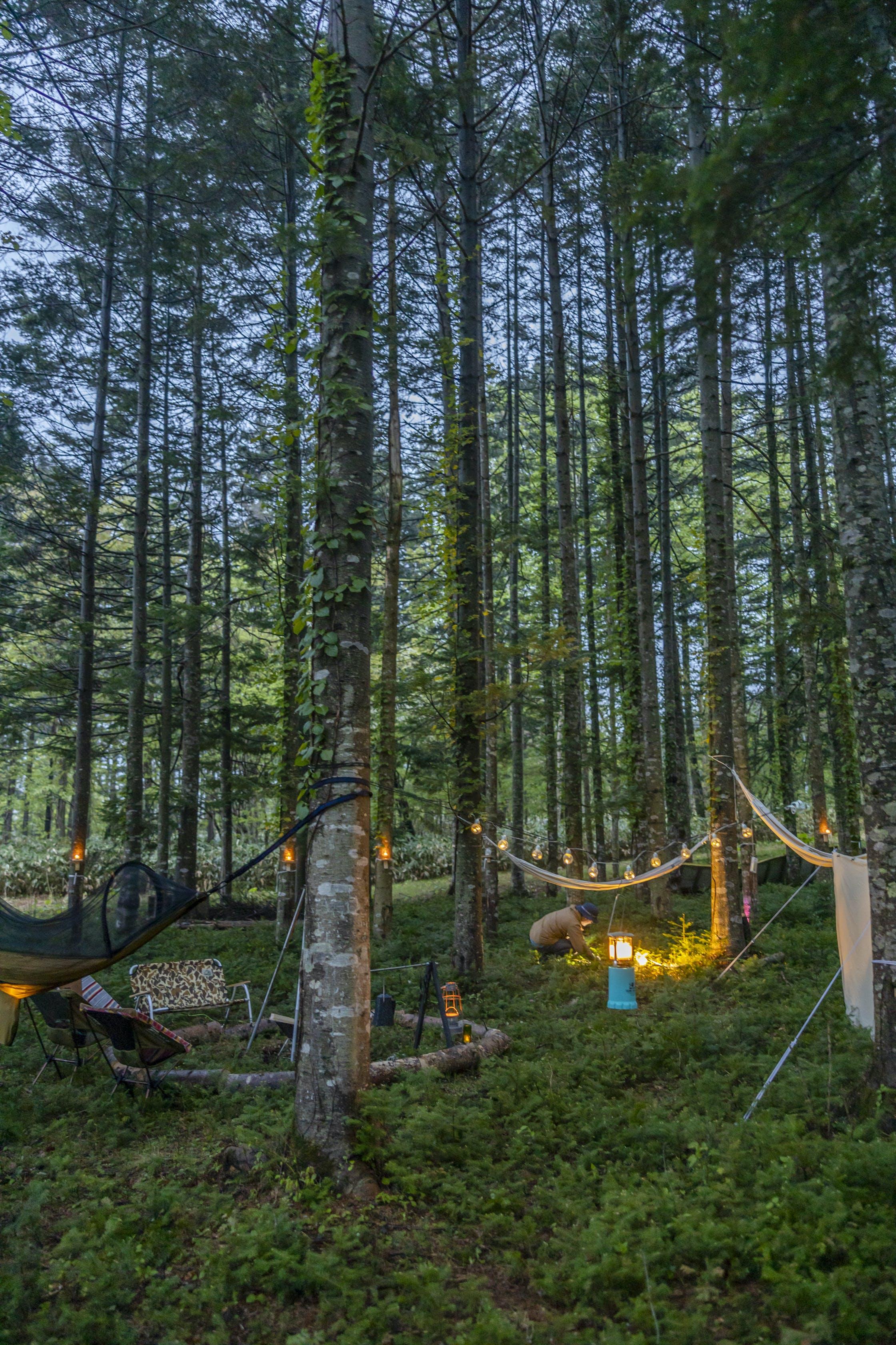 白老 キャンプ 場