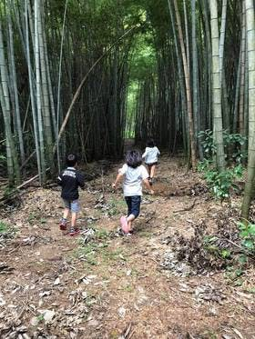 Medium 森へ走る子ども