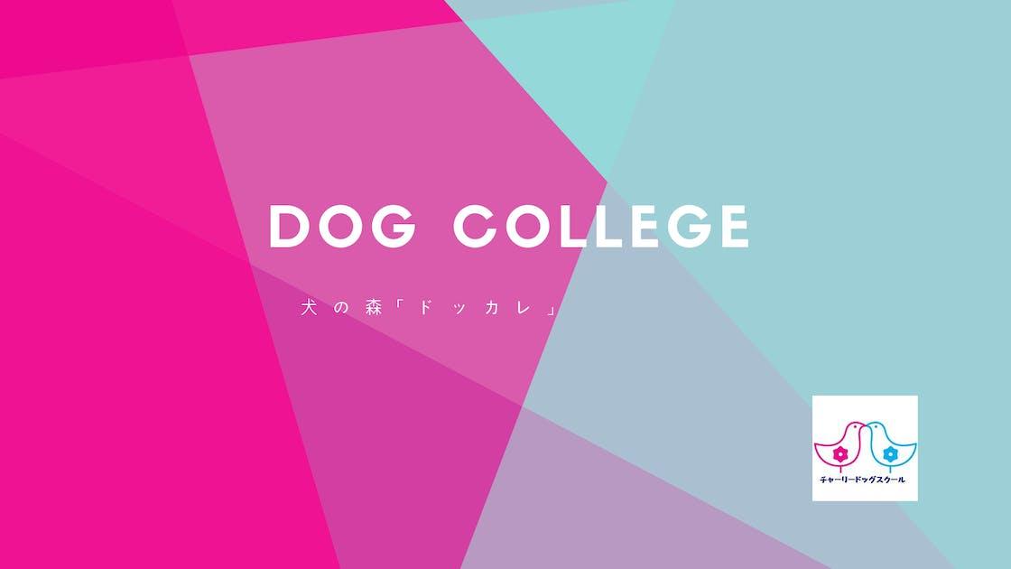 Dog college.png?ixlib=rails 2.1