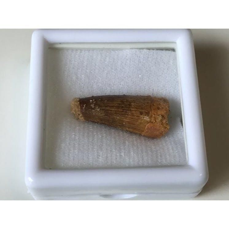 Fossils zq6n9a5him 2.jpg?ixlib=rails 2.1