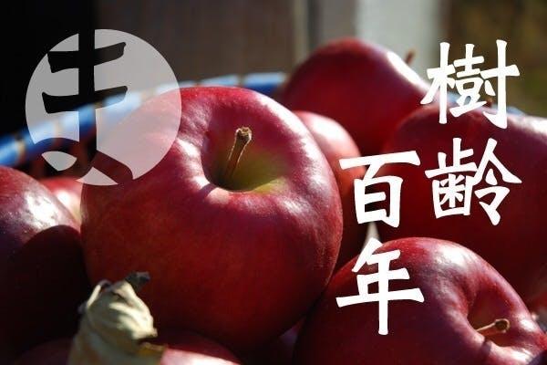 木 りんご の TOP of