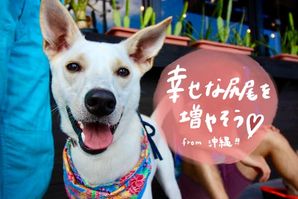 沖縄から〜幸せな尻尾を増やそうプロジェクト〜