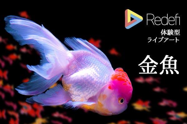 Redefi参加型ライブアート『金魚』