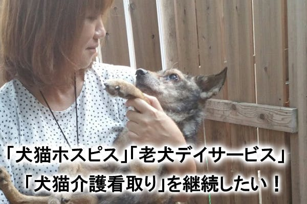 老犬、余命短い犬猫、在宅介護で苦しんでる飼主さんへのサポートを続けたい!