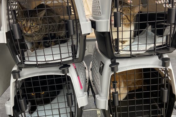 奄美大島の猫を殺処分から救う為の猫カフェ設立