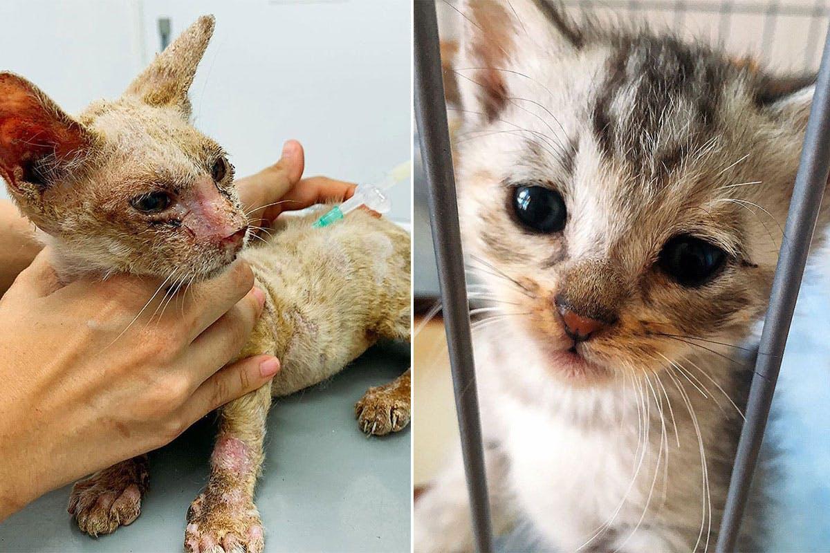 過酷な環境下で暮らしている野良猫たちを助けたい