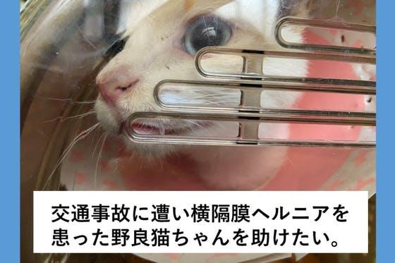猫 横隔膜 ヘルニア