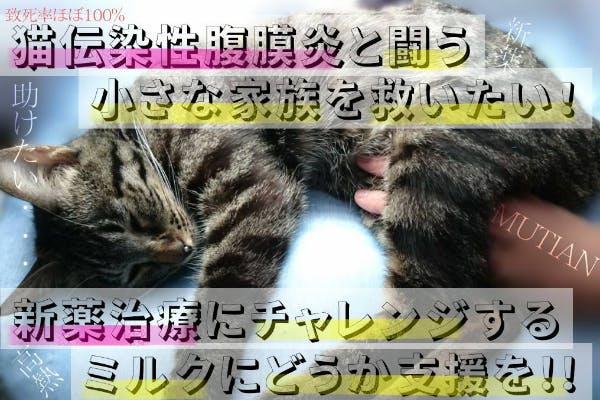 致死率ほぼ100%猫伝染性腹膜炎FIPと闘うミルクを新薬でどうしても救いたい!