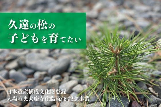 日本遺産構成文化財となった樹齢760年の「久遠の松」の子どもを育てたい!