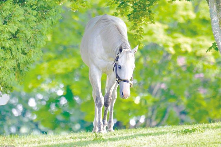 ♢美しい馬の写真集を作りたい♢サラブレッドビューティー○ゴールド ...