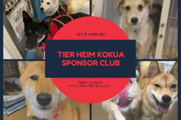 虐待や殺処分から救われた保護犬たちの命と未来をつなぐ為にはあなたの力が必要です