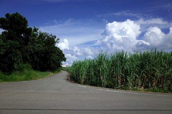 沖縄の離島、多良間島(たらまじま)の魅力を本で伝えたい!
